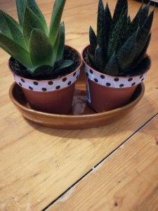 pots-suspendus-les-idees-de-mimi-plante8262749659041595706.jpg