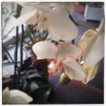 Fleur-Regarder-4lb