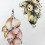 Vdessin-oignon-roscoff-6