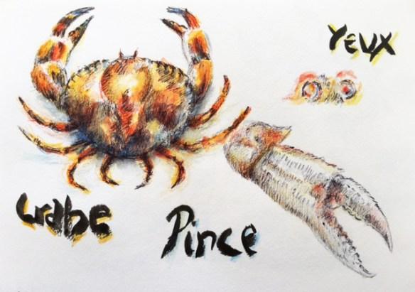 apprendre-dessiner-crabe-detail-