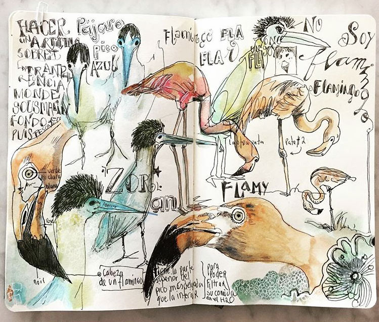 tucanes-pajaros-renata-dessin-700