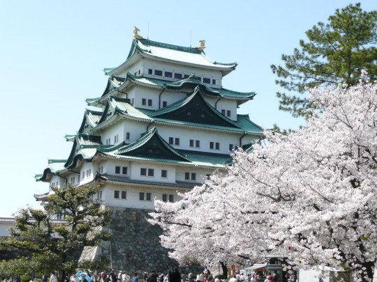 Le Chateau de Nagoya et son cerisier.