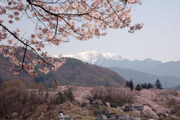 Sakura sur les Alpes Japonaises.