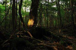 Forêt d'Aokigahara