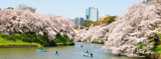Chiyoda cherry blossom festival