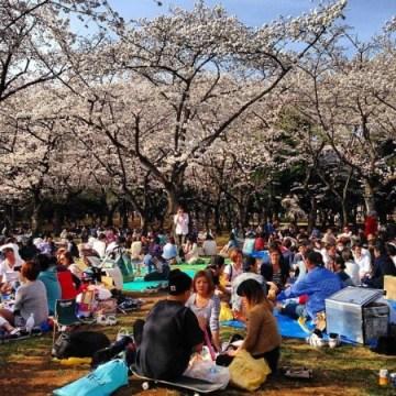 """A Tokyo, le parc Yoyogi est bondé à la venue des """"sakuraba"""""""