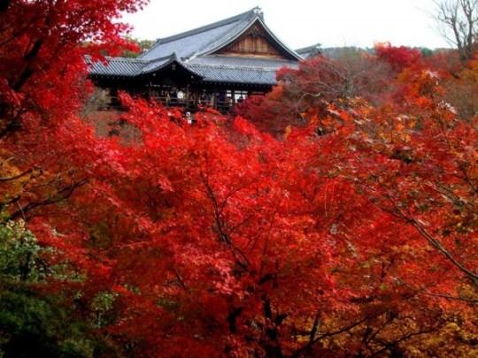 Temple Tofukuji à l'automne.