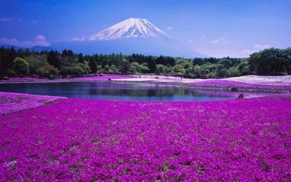 Des choses à savoir sur le Japon