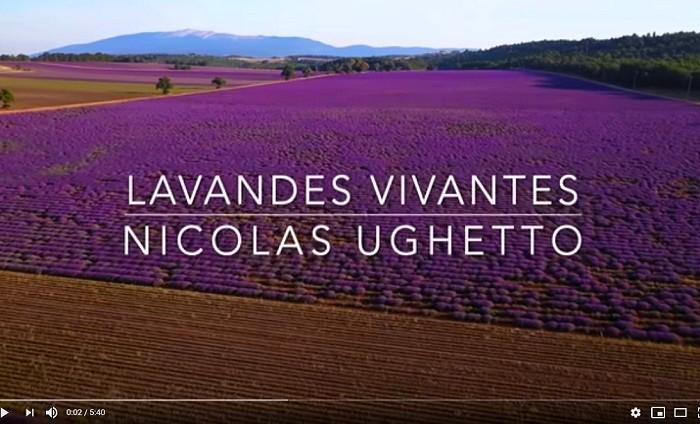 Une histoire fleurie en Provence