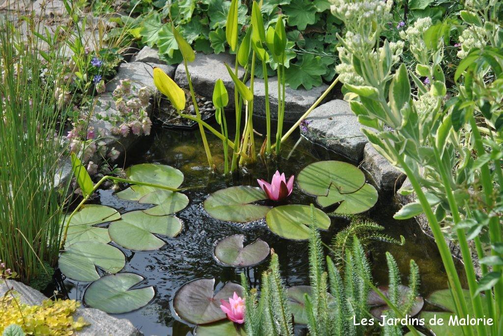 d eau au jardin