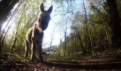 Un de nos ânes : est-ce Cachou ou Souris ?
