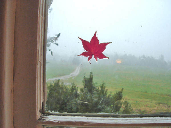 rainleafwindow