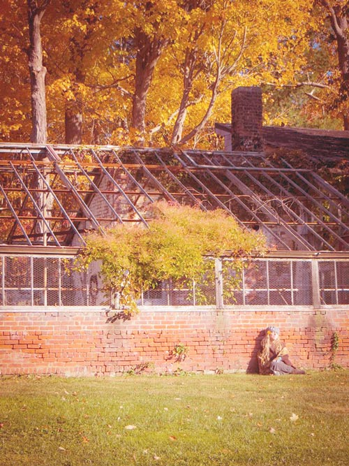 me-and-my-glasshouse-and-the-sun