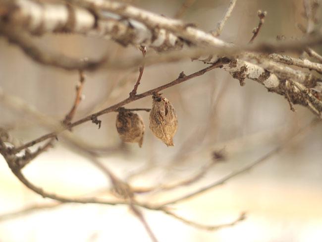 snowkernels