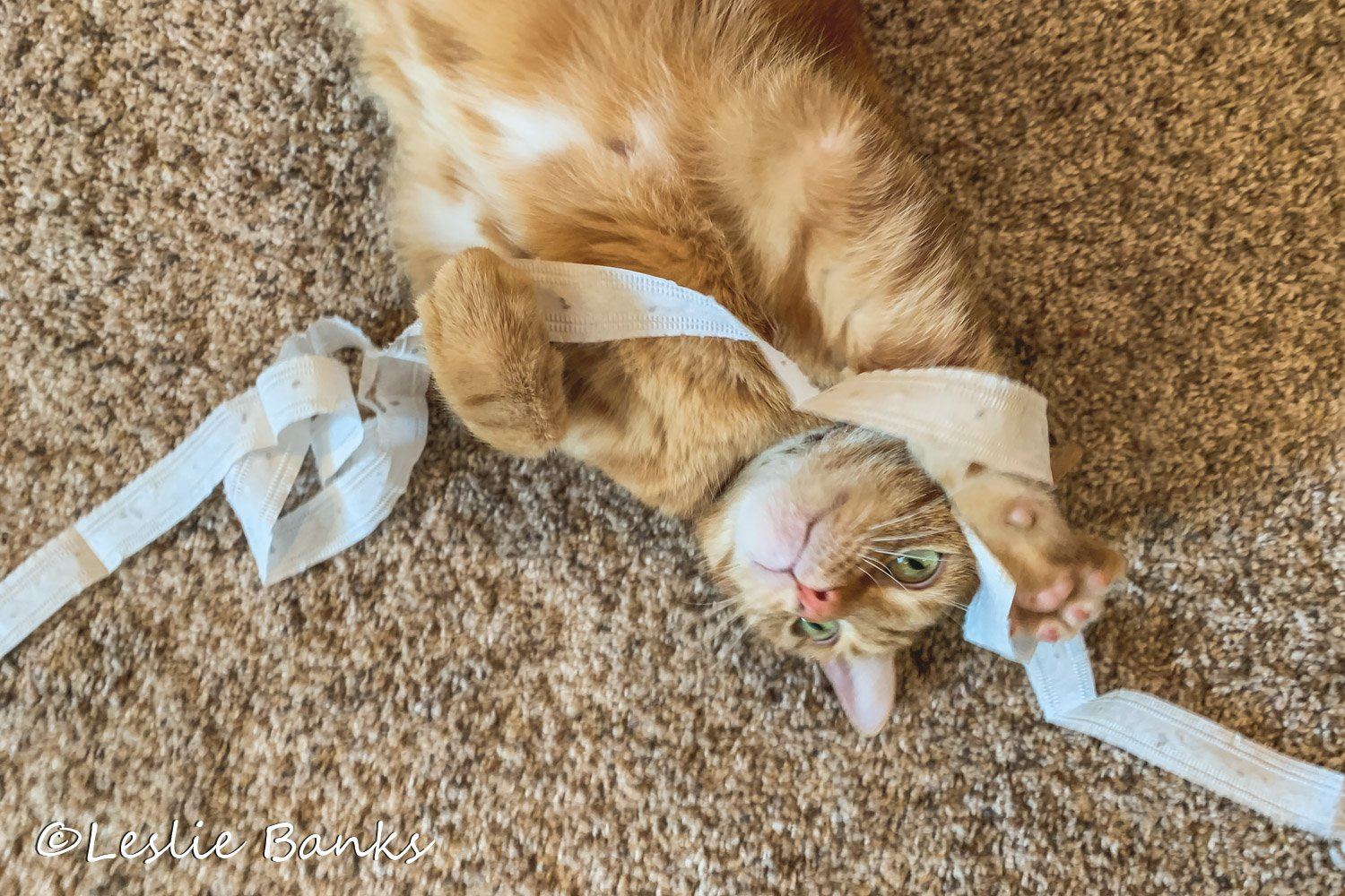 Cat Playing with Seed Tape