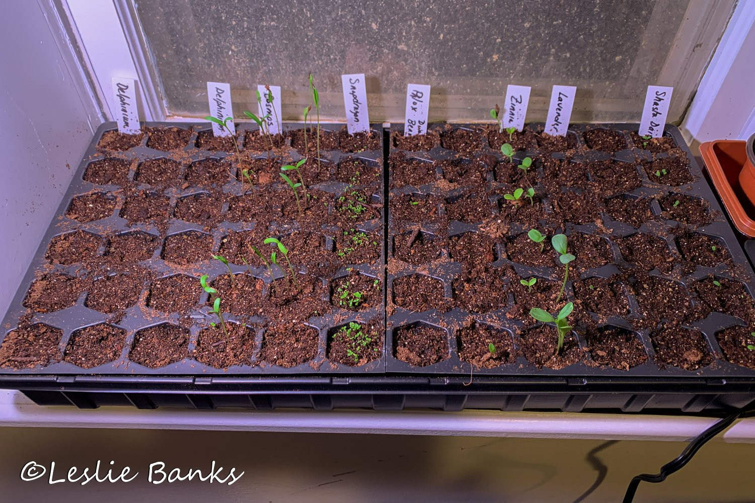 Seed Starting Kit on a Heat Mat