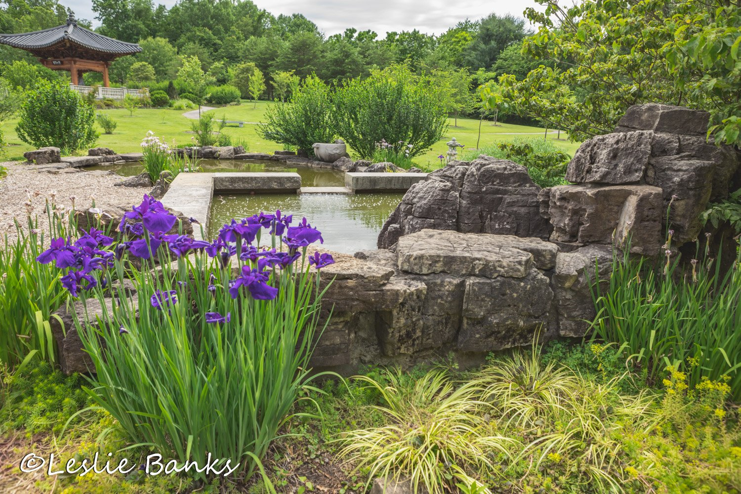 Ponds and Waterfalls at Meadowlark Botanical Gardens