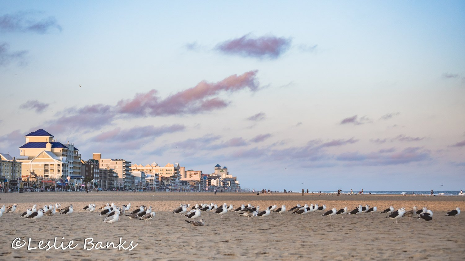 Flock of Seagulls at Ocean CIty Maryland