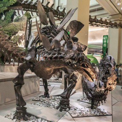 Smithsonian Natural History Museum Dino Exhibit Reopens!