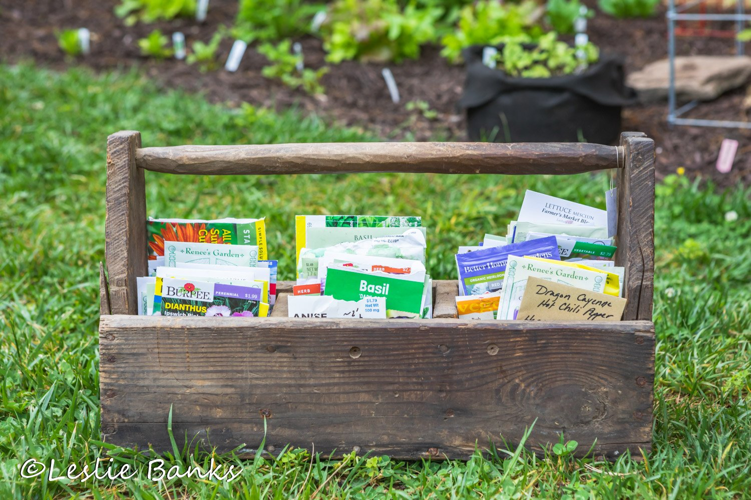 Seed Packets in a Tool Box