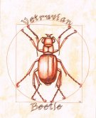 Vetruvian beetle