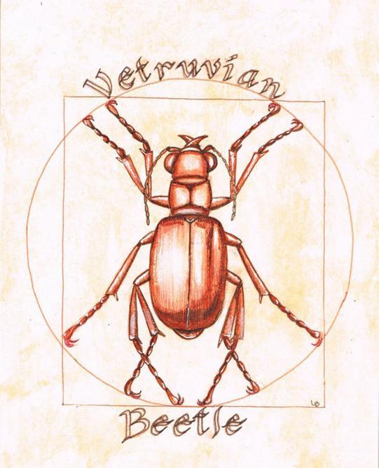Vitruvian Beetle