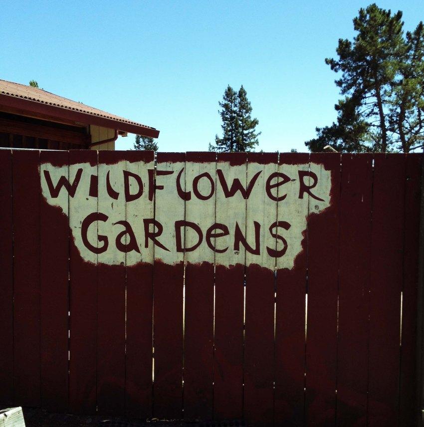 wildflower5