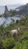 Yep, a goat in a tree.