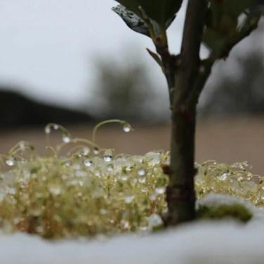 Il a neigé (un peu) sur Bordeaux