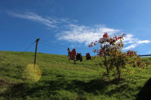 Nouvelle Zélande - Hobbiton - Les lubies de Louise (8)