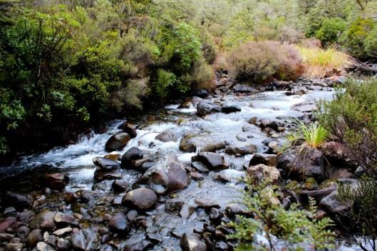 Nouvelle Zélande - Tongariri national parc - Les lubies de louise (6 sur 25)