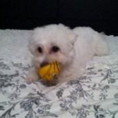 Ma petite jouette