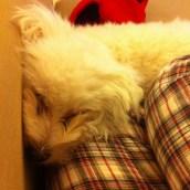 La vie d'un chien est vraiment difficile