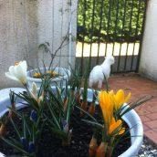 Spring & dog