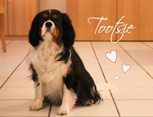 Tootsie 3 avril 2014 - Les lubies de louise-titre