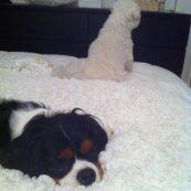 Elles se boudent... :/