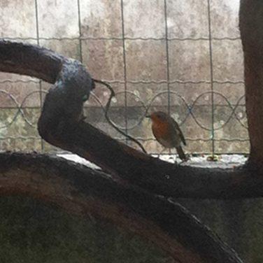 Mon petit bonheur, mes oiseaux...