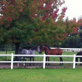 Même les chevaux sont amoureux ♥