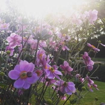 Les fleurs de mon beau papa sont trop cute.