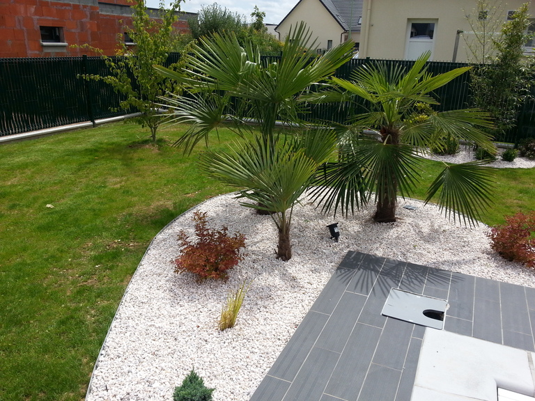 Cr ation les mains vertes for Amenagement jardin avec palmier
