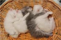 Kittens-Part1-4