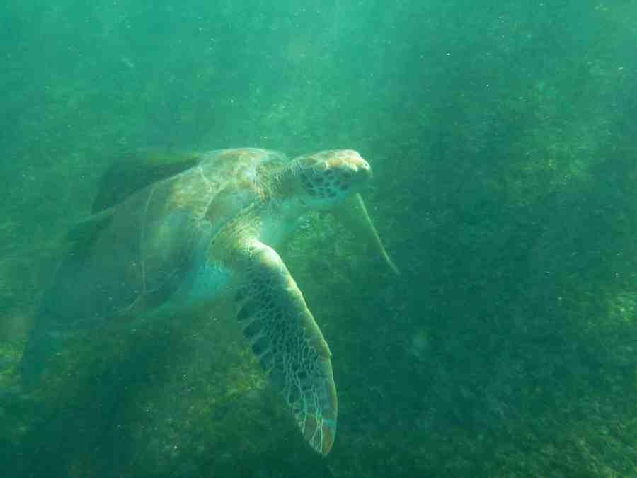 vue de profil d'une tortue en mer