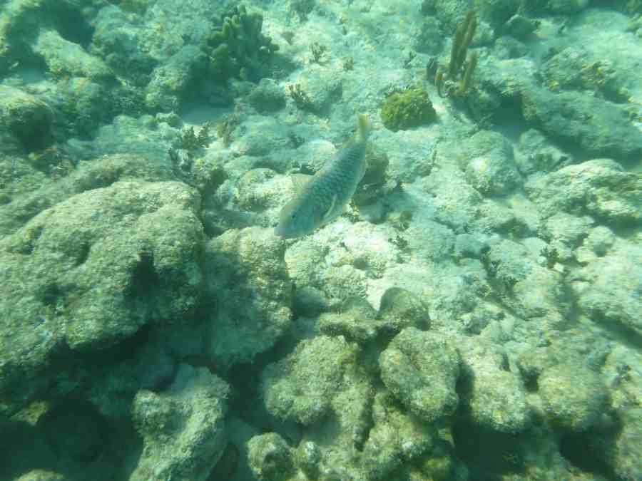 les profondeurs marines du mexique