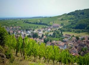 vue panoramique sur les village d'Andlau et Mittelbergheim
