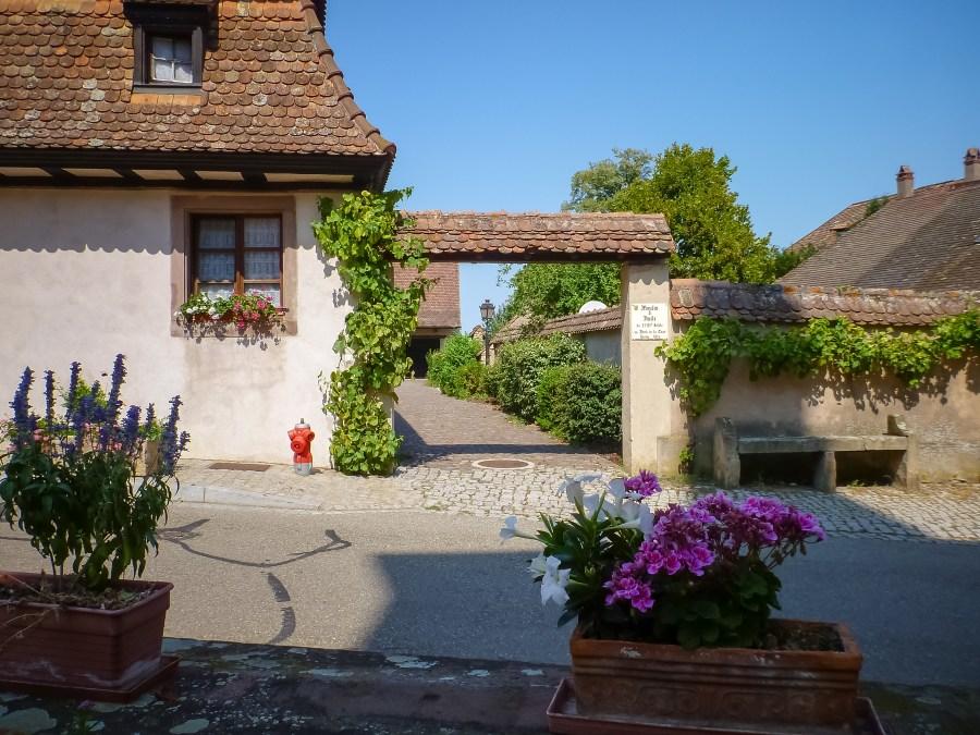route des vins-alsace-france-mittelbergheim-rue-village-maison
