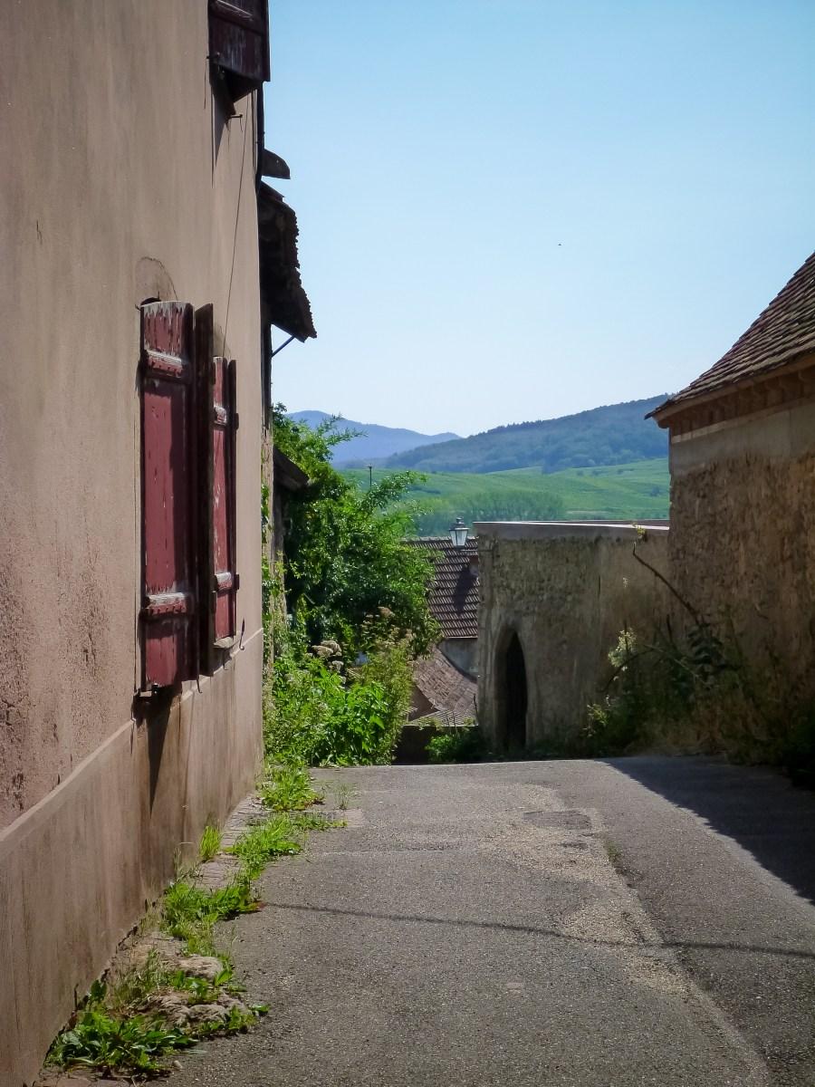 route des vins-alsace-france-mittelbergheim-rue-village-vert-vegetation