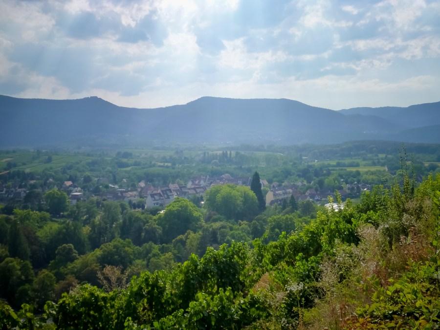 route des vins-alsace-france-obernai-vue panoramique-foret noire-vosges