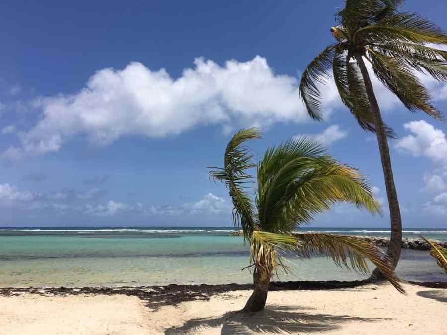 plage-sainte anne-eau-translucide-guadeloupe-caraibes-palmiers