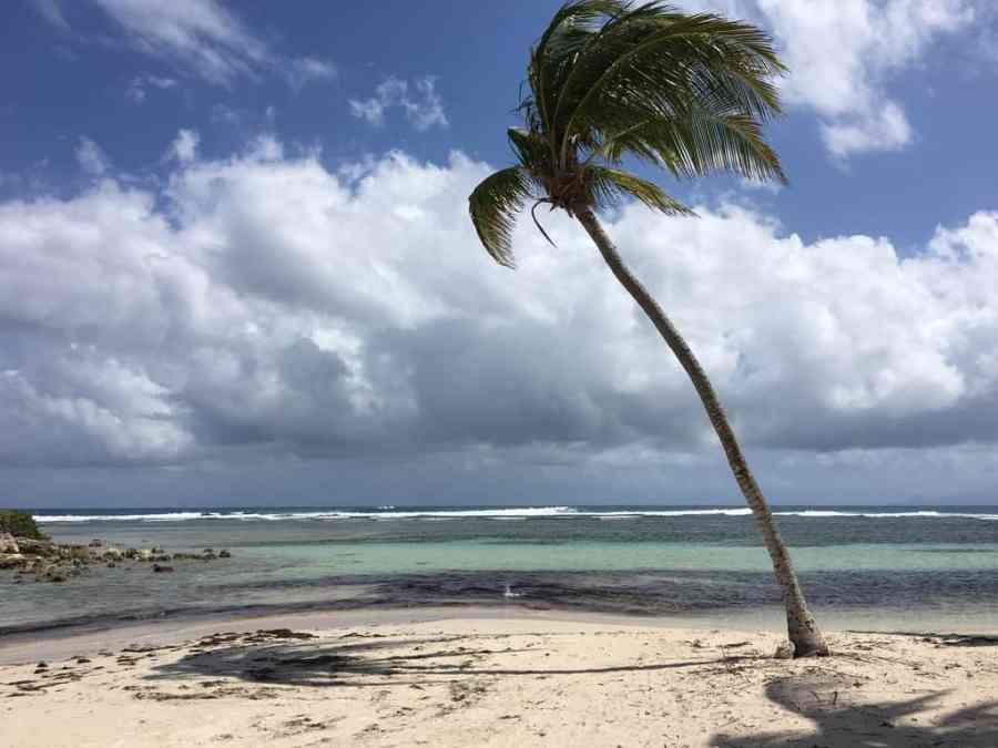 palmiers-plage-guadeloupe-caraibes-mer-sable-club med-caravelle