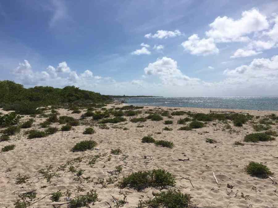 ile-petite terre-sauvage-guadeloupe-caraibes